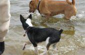 Natuurlijke manieren om een hond beter ruiken