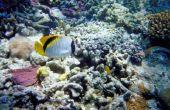 Welke dieren leven in een koraalrif