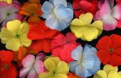 How to Make dauw druppels op bloemen met een lijmpistool