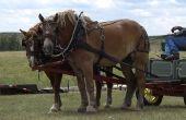 How to Train een trekpaard