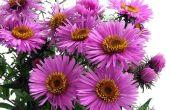Wat soort bloemen doen goed in de volle zon?