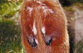 Bloemen die Groundhogs en herten zal niet eten