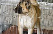 Hoe te vouwen van een inklapbaar hond kooi