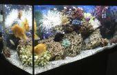 Een lijst van de verschillende soorten zeedieren