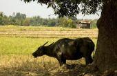 Lijst van bedreigde diersoorten in de Filippijnen