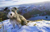 Hoe een hond wandelen in de Winter