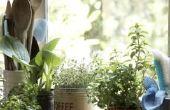 How to Get Rid van fruitvliegen in binnen Plant bodem