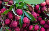 Soorten tropische vruchtlichamen struiken