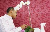 Waar te snijden de stengel van een orchidee nadat de bloemen verdwenen zijn