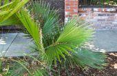 Zorg voor een windmolen Palm Tree