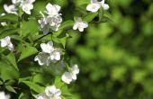 Inheemse bloemen die groeien in Alabama