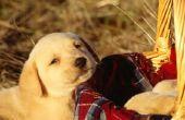 Wat is een goede bron van Calcium voor pups?