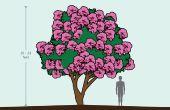 Hoe de zorg voor een crêpe Myrtle boom