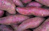 Hoe verspreiden een zoete aardappel wijnstok