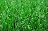 Welke maand voor gras zaaien?