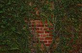 Ideeën voor het verbergen van een exterieur bakstenen muur
