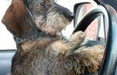 Hoe schoon de Urine van de hond in een nieuwe auto