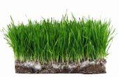 Hoe om te voorkomen dat vogels eten gras zaden