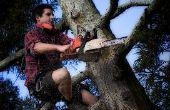Hoe Trim een boom met een kettingzaag