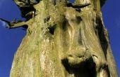 Hoe te schrijven van een brief naar een buurman vraagt aan het omhakken van een boom