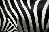 Hoe voor het decoreren van Cupcakes in een Zebra Print