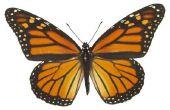 Wat zijn de drie soorten van het lichaam van symmetrie?