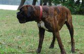 Canine kanker met hoesten & hacken