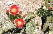 Wat zijn de woestijn planten?