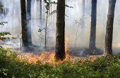 Lijst van brandbare planten, bomen & struiken