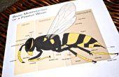How to Keep wespen uit de buurt van uw huis