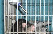 Soorten dierproeven