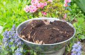 Hoe te gebruiken van de koffie gronden in de tuin