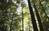Hoe te stoppen met een boom uit het krakende