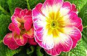 Bloemen die alleen's ochtends zon nodig