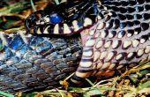 Soorten zwarte & gele slangen