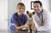 De symptomen & behandeling voor hond vergiftiging
