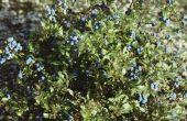 Landschap planten die in New Jersey's Pinelands gelden