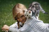 Hoe de zorg voor een kat met cerebellaire hypoplasie