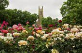 Rose tuinen 101