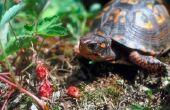 Planten die giftig zijn voor vak schildpadden