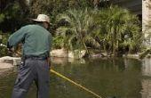 Lente voorbereiding & schoonmaken voor een vijver achtertuin watertuin