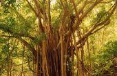 Lijst van tropische bomen