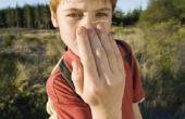 Hoe maak je een Insect huis voor kinderen