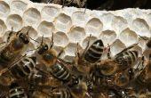 Allergisch voor bijenwas