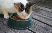Kat Feeders dat voedsel koel te houden