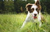 De beste ras van de hond voor een kleine Ranch