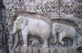 Mythes over olifanten