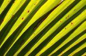 Hoe te weven van palmbladeren dieren