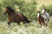 De natuurlijke Habitat van een paard