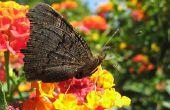 Planten & bloemen die het goed in Florida Sun doen